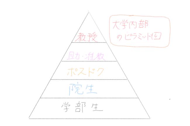 大学のピラミッド